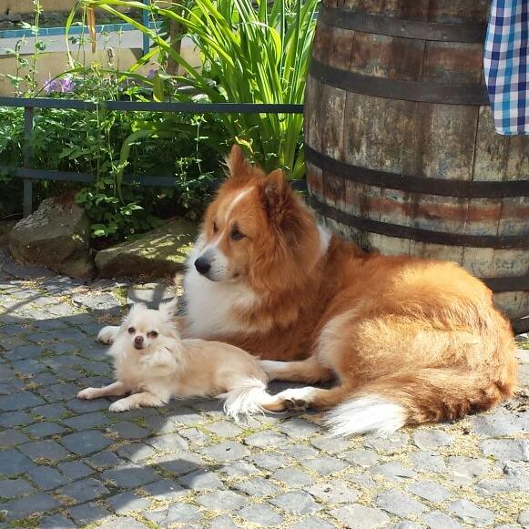 hunde_P01.png